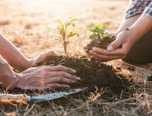 Tasmania's Bioenergy Future Online Summit