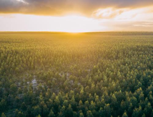 Northern Tasmania Regional Forestry Hub Update